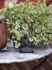 Small buddha figurine, differential focus — Stock Photo