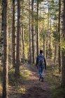 Visão traseira do caminhante na floresta — Fotografia de Stock