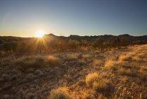 Vista panorámica del bosque en verano, enfoque selectivo - foto de stock