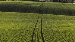Champ vert rayé, europe du Nord — Photo de stock