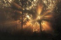 Sunbeam through trees at dawn, selective focus — Stock Photo