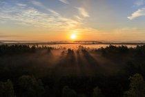 Vista panorámica del bosque al amanecer con los rayos de sol - foto de stock