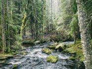 Malerischer Blick auf den Bach im Wald im Frühling — Stockfoto