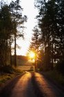 Landscape with empty road and setting sun — Stock Photo