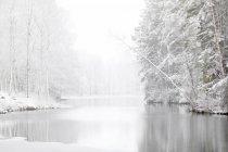 Malerischer Blick auf Fluss und schneebedeckten Wald — Stockfoto