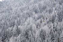 Scenic view of snow on trees in La Thulie, Italy — Stock Photo