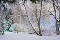 Winter scene with trees and footbridge covered with snow — Stock Photo