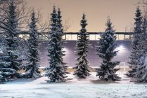 Row of snow-covered trees against illuminated wall — Stock Photo
