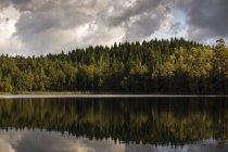 See spiegelt Wald in Harskogen, Schweden — Stockfoto