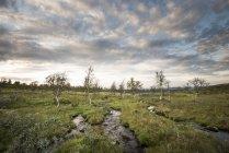Scenic view of streams in Pallas-Yllastunturi National Park, Finland — Stock Photo