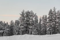 Scenic view of winter forest — Stock Photo