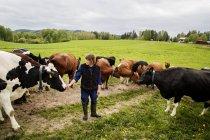 Фермер з коровами в полі, селективний фокус — стокове фото