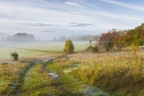Fog under field at autumn, selective focus — Stock Photo