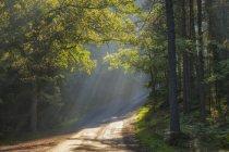 Sonnenstrahlen über Waldstraße in Lidingo, Schweden — Stockfoto