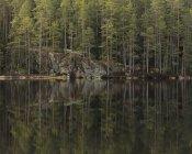 Wald an See, selektiver Fokus — Stockfoto