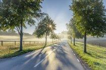 Route rurale bordée d'arbres à Lidingo, Suède — Photo de stock