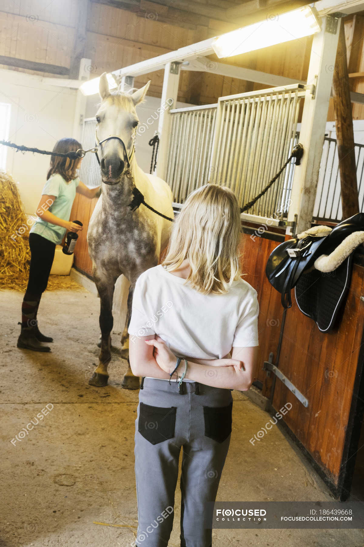 Girls And White Horse In Stable Indoors Female Stock Photo 186439668
