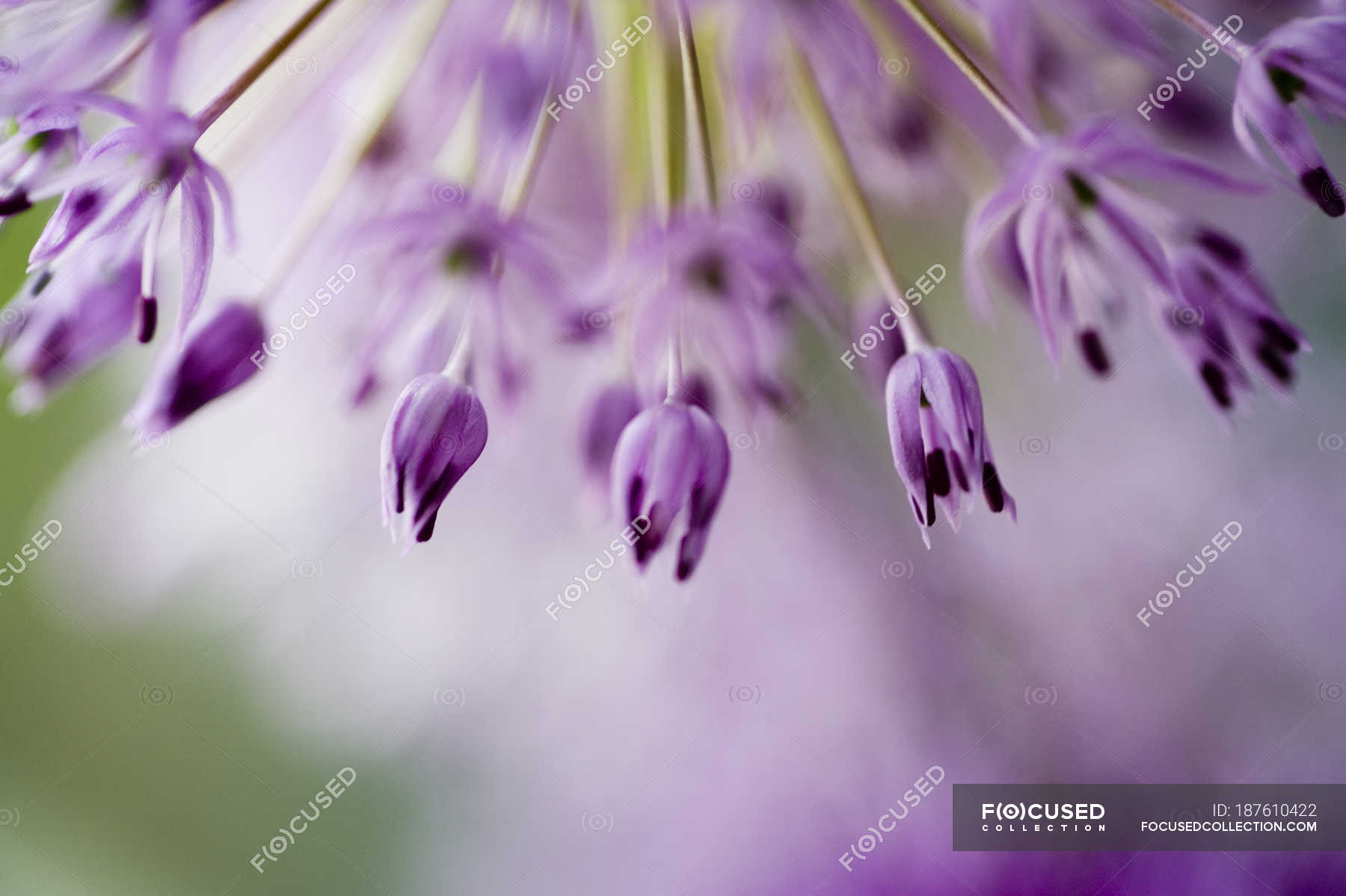 Close Up View Of Fresh Spring Flowers Stock Photo 187610422