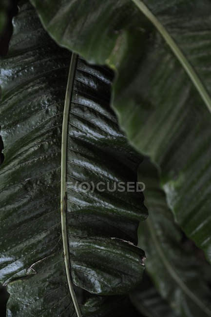 Close up shot of large green leaves — Stock Photo