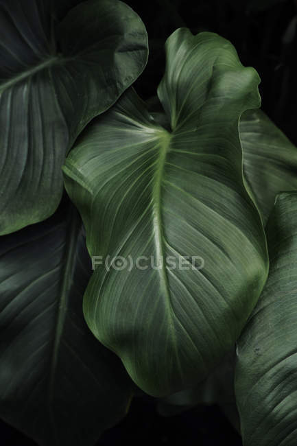 Close up shot of green tropical leaves — Stock Photo