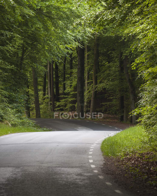 Road winding through green beech forest — Stock Photo