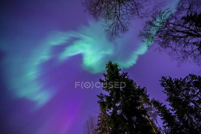 Просмотр веток деревьев на Северное сияние освещенные небо — стоковое фото