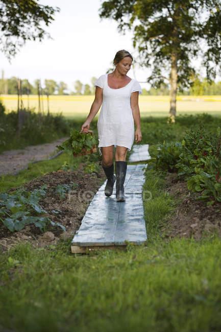 Femme mûre récolter des légumes et regarder vers le bas — Photo de stock