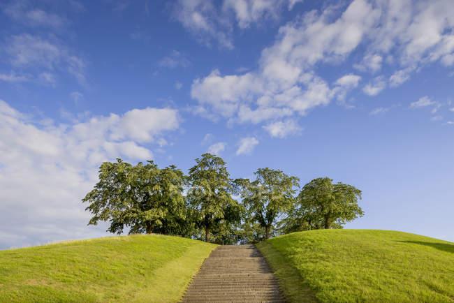 Дерева на вершині пагорба з кроків попереду — стокове фото