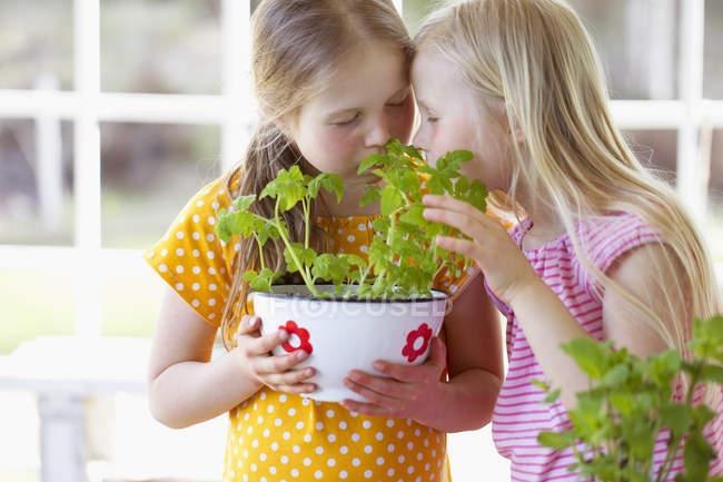 Девушки, нюхающие томатные саженцы, избирательный фокус — стоковое фото
