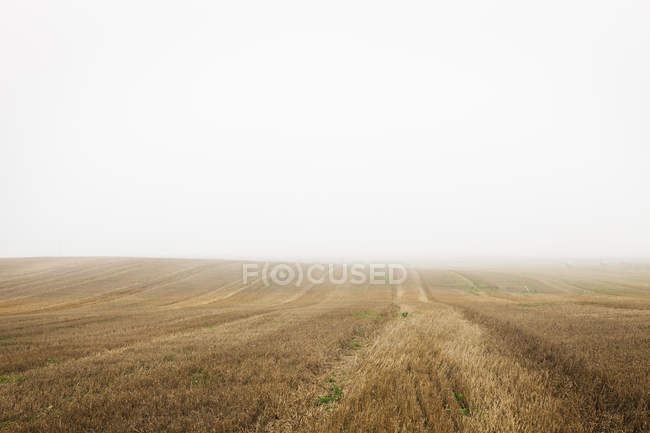 Diminishing perspective view of foggy field — Stock Photo