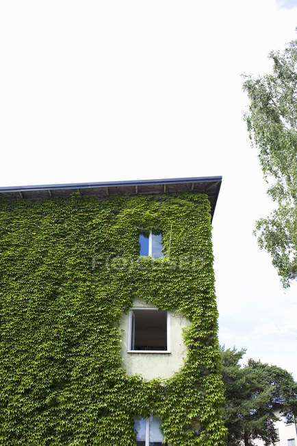 Low angle view of house facade overgrown with ivy — Stock Photo