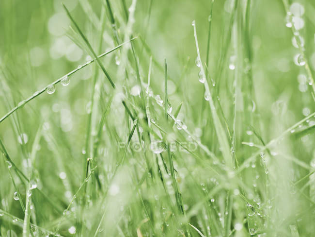 Close up shot of wet green grass — Stock Photo