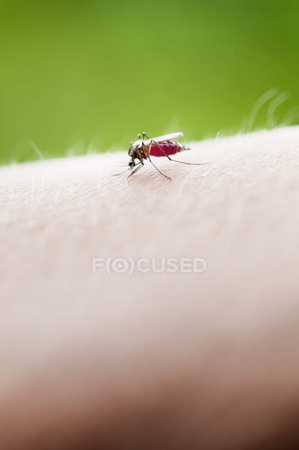 Close-up de insetos na pele humana, foco diferencial — Fotografia de Stock