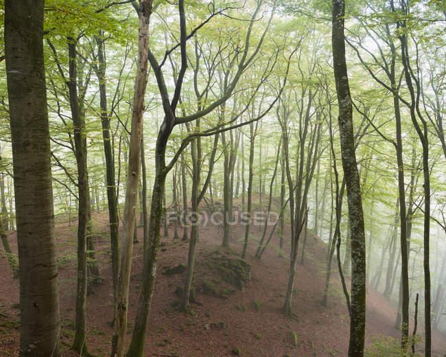 Árvores florestais enevoadas e rio no Parque Nacional Soderasen — Fotografia de Stock