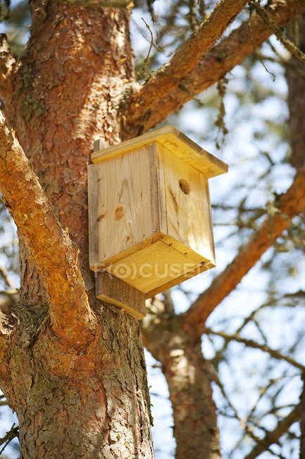 Niedrigen Winkel Blick auf Holz Vogelhaus auf Baum — Stockfoto