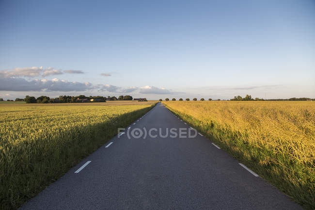 Country road passing through green fields in sunlight — Stock Photo