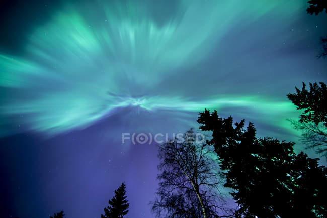 View of tree branches on aurora borealis illuminated sky — Stock Photo