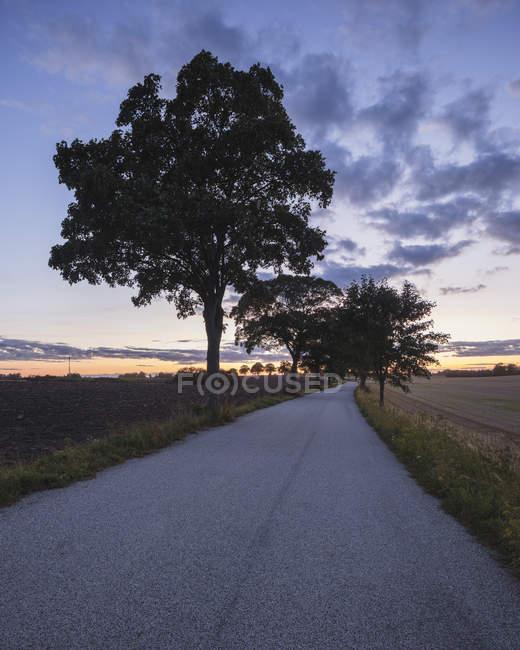 Estrada vazia com árvores sob o céu do sol — Fotografia de Stock