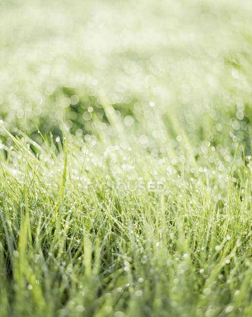 Close up shot of wet grass in sunlight — Stock Photo