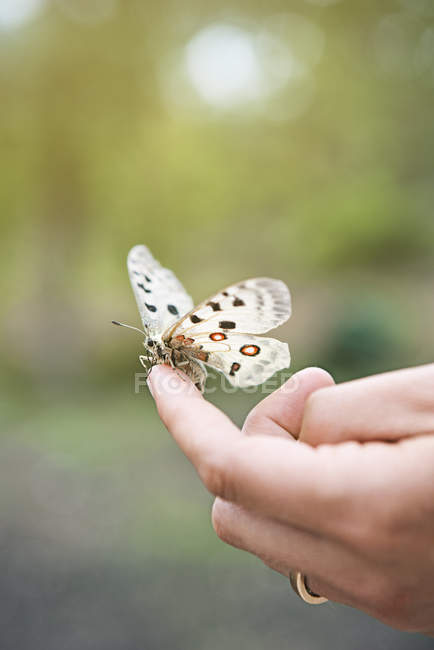 Close up of butterfly sitting on finger — Stock Photo