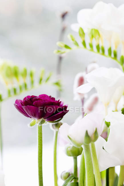 Close up shot of sun lighted flowers — Stock Photo