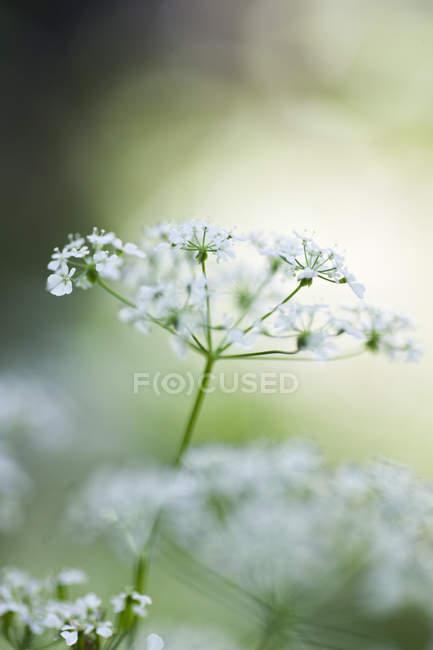 Close-up tiro de plantas florescendo — Fotografia de Stock