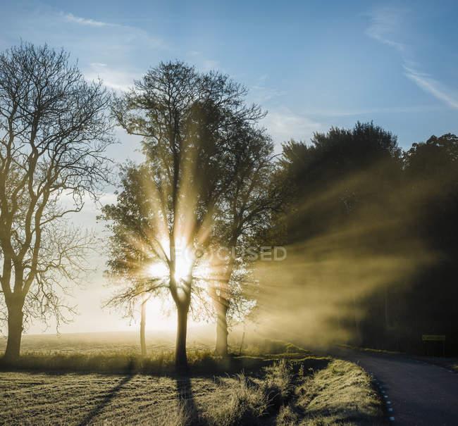 Вид спереди Солнечный свет через деревья — стоковое фото