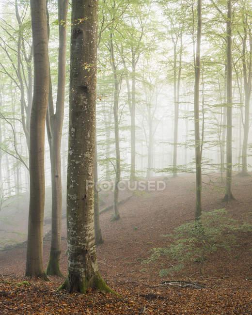 Arbres de la Forêt brumeuse et rivière au Parc National de Soderasen — Photo de stock