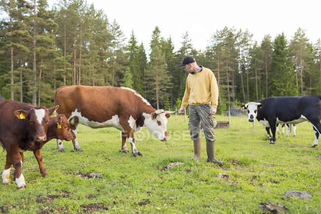 Bauer mit Kühen auf der Weide posiert — Stockfoto