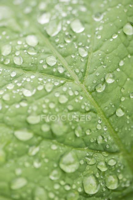 Cierre plano de hoja verde con gotas de agua - foto de stock