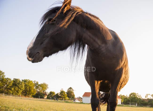 Низким углом зрения лошади на поле в солнечном свете — стоковое фото
