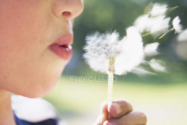 Мальчик, сносит Семена одуванчика — стоковое фото