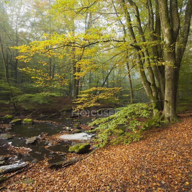 Árvores da floresta verde e Rio no Parque Nacional de Soderasen — Fotografia de Stock