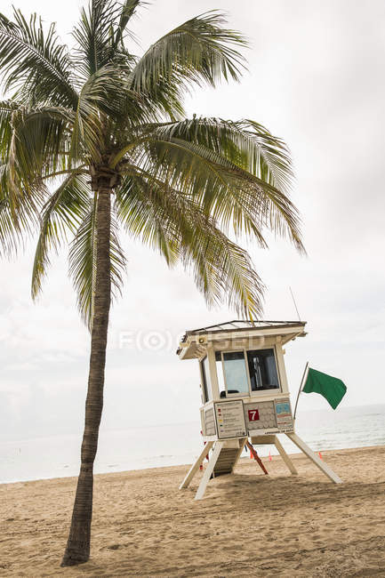 Lifeguard hut on beach next to palm tree — Stock Photo